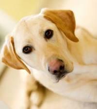 La stérilisation de la chienne